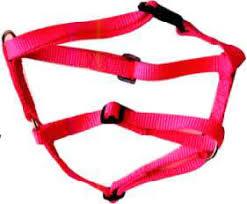 collar halter