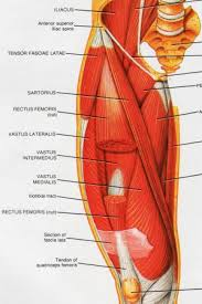 diagram of knee tendons