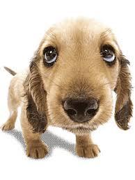 animated dog screensavers