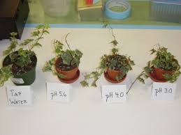acid rain effects on plants