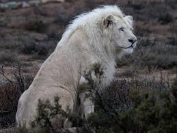 animales salvajes de la selva
