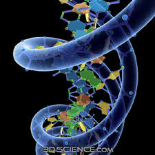pic of dna