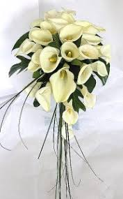 cream calla lilies