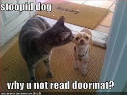 funny cat dog