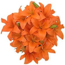 flowers orange