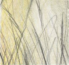 pencil grass