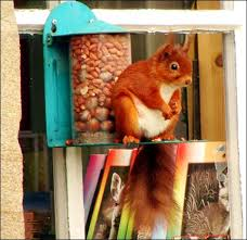 squirrel gift