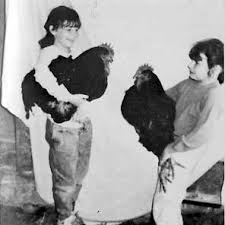 black giants chickens