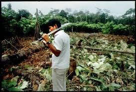 cut down the rainforest