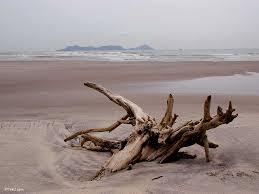 picture of a beach scene