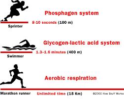 lactic acid muscle