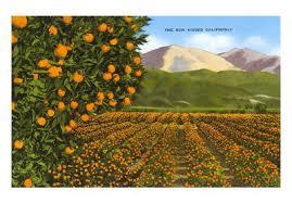 orange juice company
