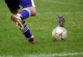 CAT-tastrophes! F-funny-cat-3539