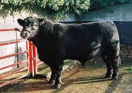 bull sales