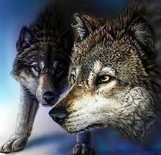 hd wolf