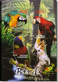 rainforest bird pictures