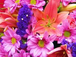 free flowers screensavers