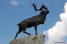 caribou newfoundland