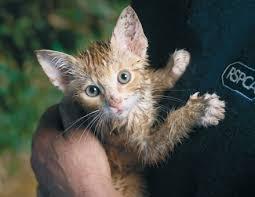 rspca animal rescue