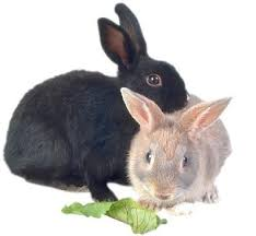 rabbits picture