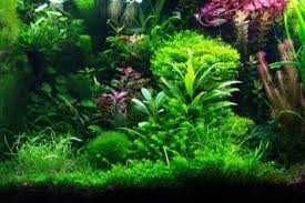 plants for fish