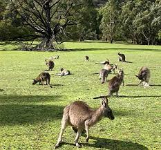 australian animal photos
