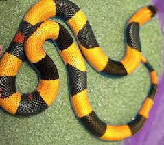 halloween snakes