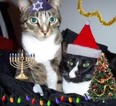 cats holiday