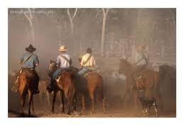 australian cattle stations