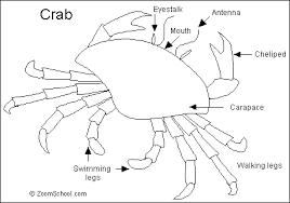 crab animals