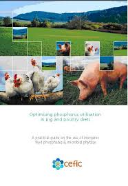 pig poultry