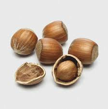 picture of hazelnut