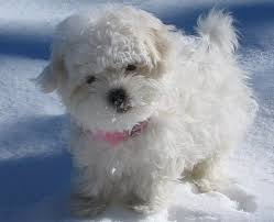 pictures of coton