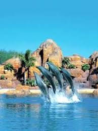 sea world in gold coast
