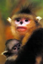 chinese monkeys
