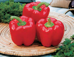 red bell pepper seeds