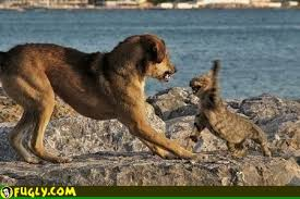 dog and cat fights