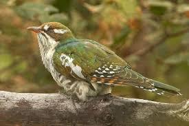 south african garden birds