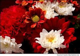 flowers e cards