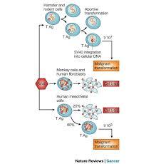 lysis cell