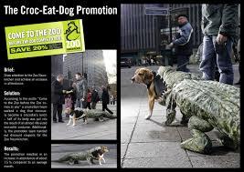dog promotion