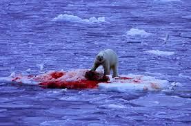 polar bear video