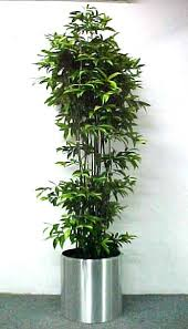 bamboo potted plants