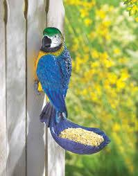 parrot bird pictures