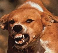 animals that have rabies