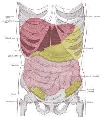 liver lymph nodes