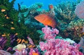coral reefs in fiji
