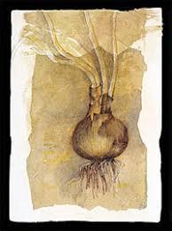 daffodils bulb