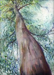 eucalyptus trees australia