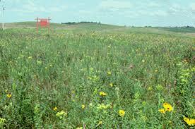 native prairies